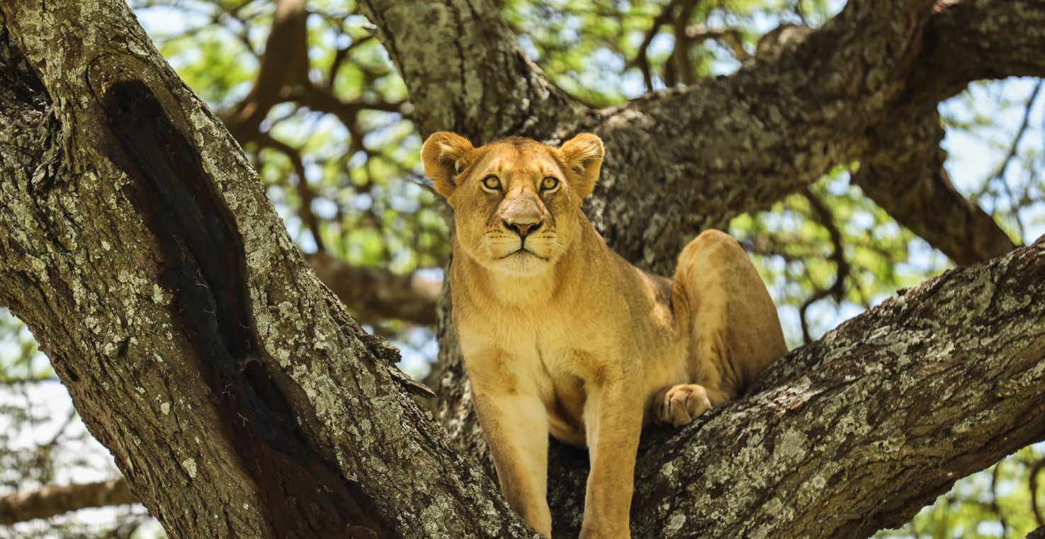 African Retreat Tours and Travels
